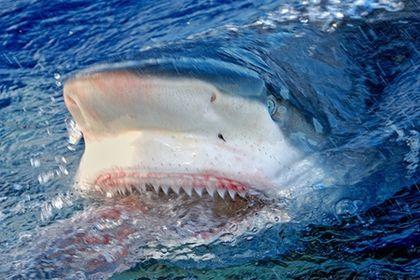 ...акулы ничтожен, и потому многие отдыхающие на