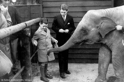 В лондонском зоопарке лето 1938 года